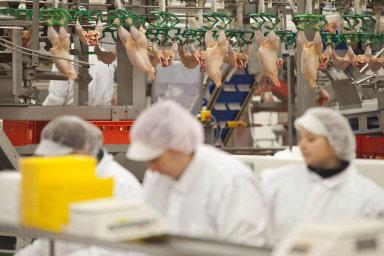Všech 12 příjemců zásilek musí nyní před uvolněním dalšího polského masa na trh nechat drůbeží maso prověřit na salmonelu - Ilustrační foto.
