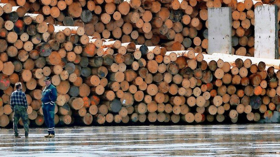 Less & Forest (ilustrační foto)