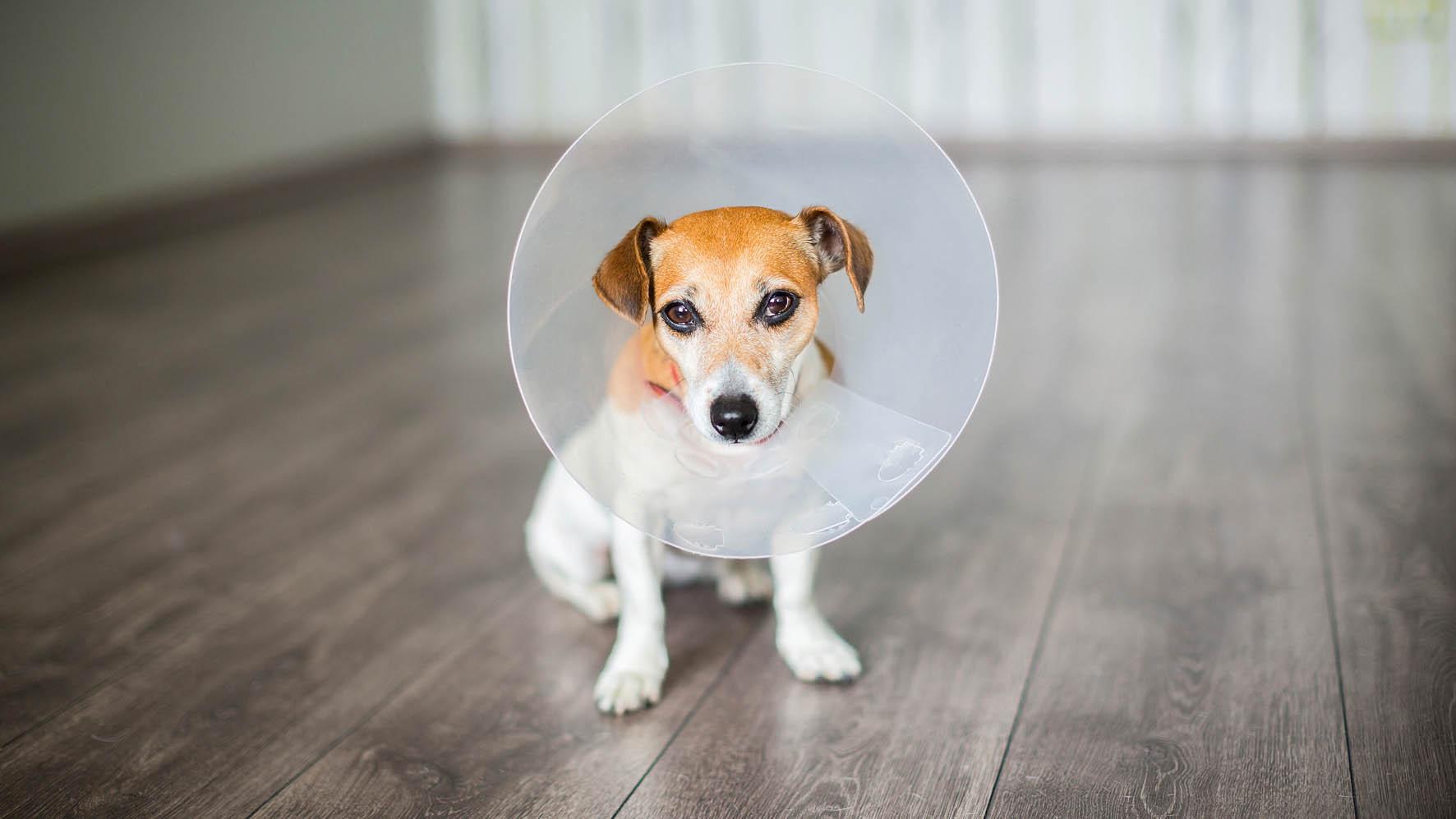 Ochranný límec pro psy