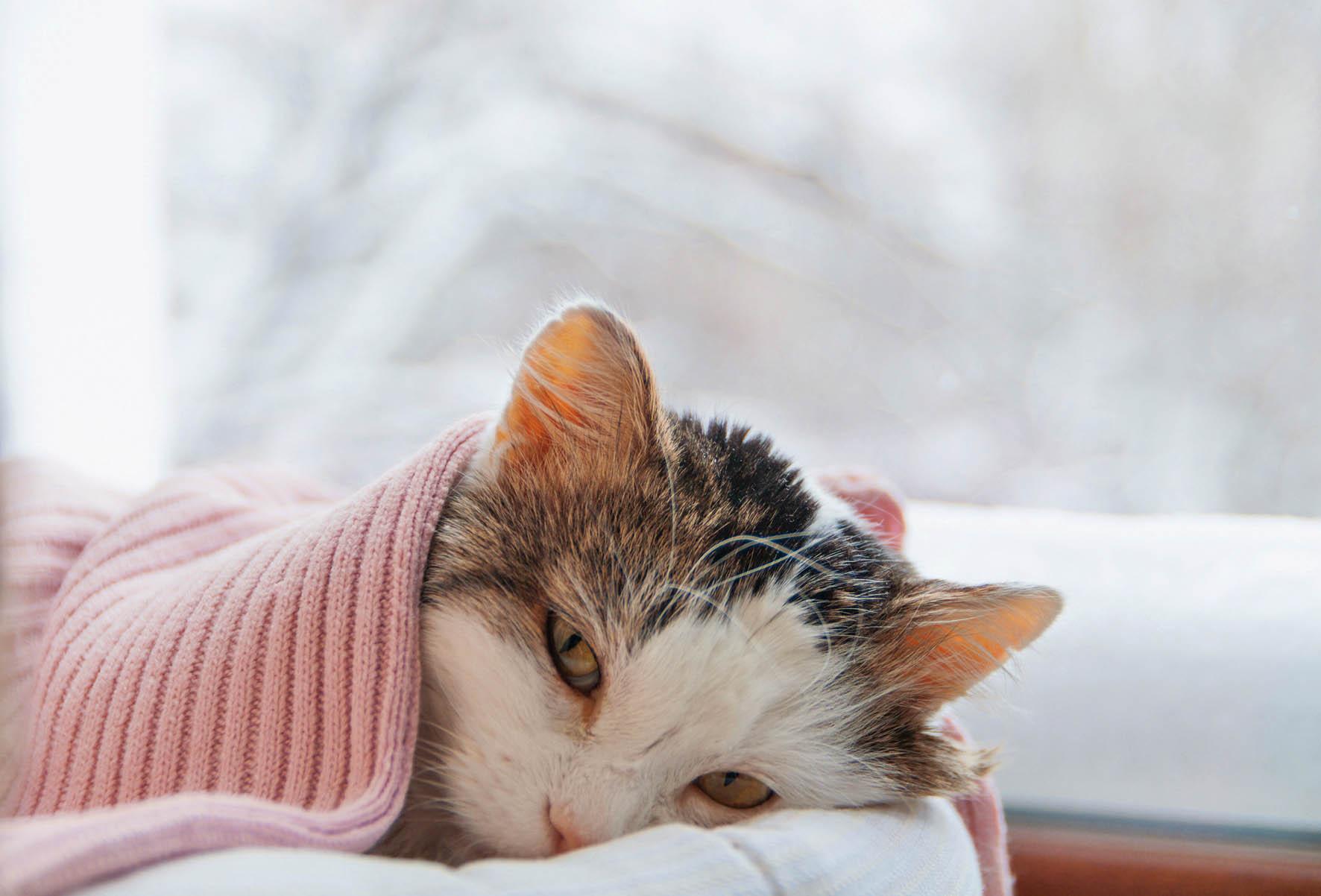 Kočičí virózy jsou mnohem závažnější než u lidí a mnohdy končí smrtí.