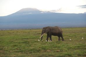 pod_Kilimand__rem_295x195.jpg