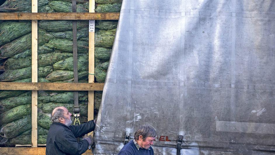 Robert Šíma prodá ročně desetitisíce vánočních stromků.