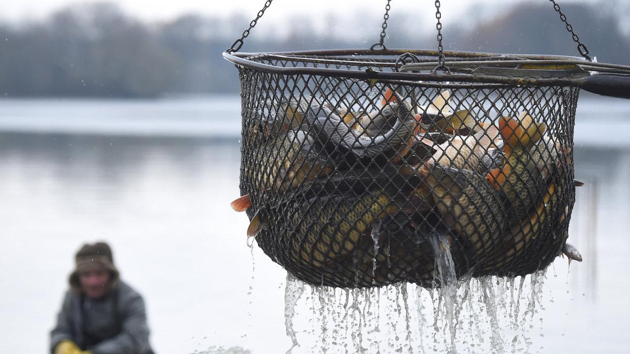 V Jistebn_ku na Novoji__nsku za_al 11. listopadu v_lov rybn_ka Bezru_