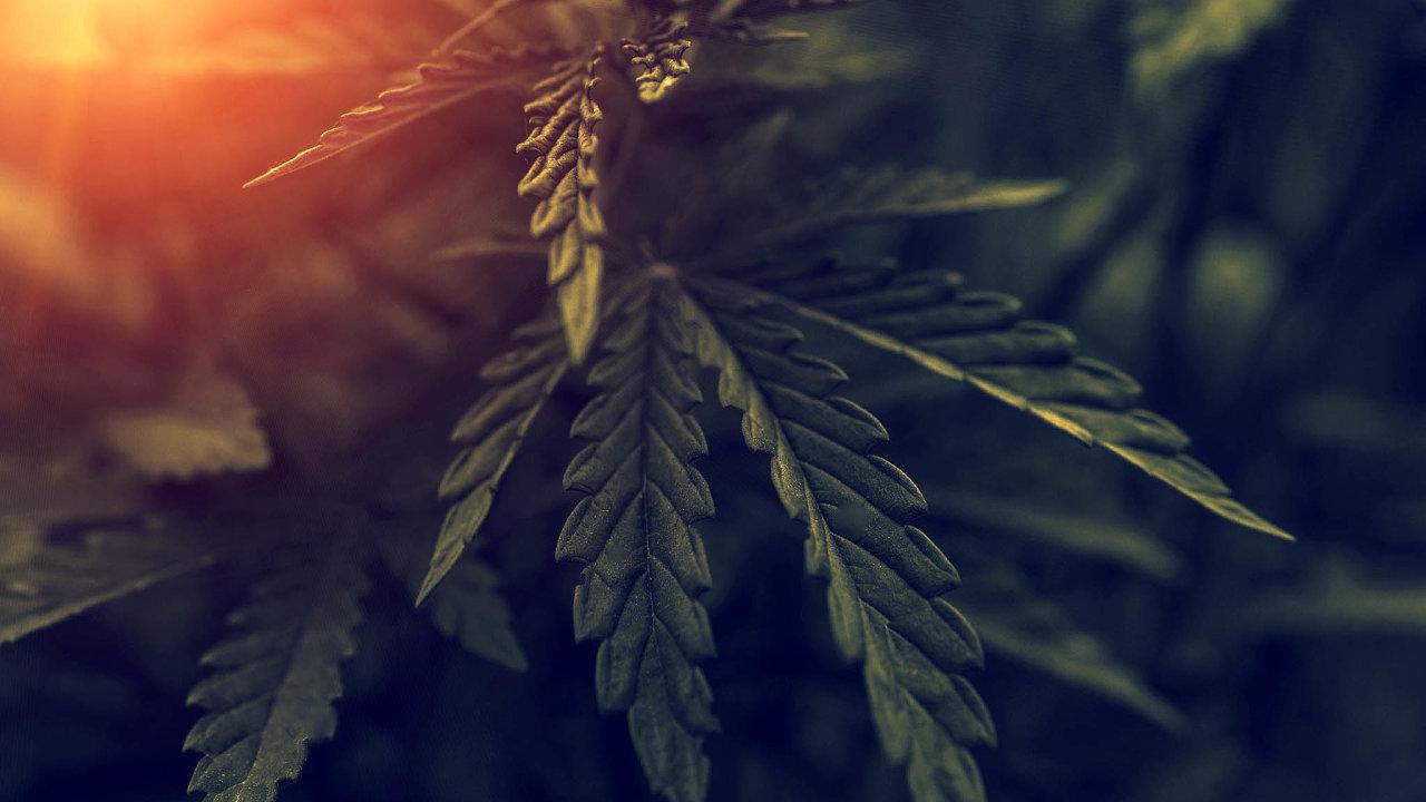 Miliardu dolarů zaplatila firma Curaleaf Holdings za konkurenční společnost Cura Cannabis. Vdějinách tak šlo onejvyšší dosaženou částku na trhu slegální marihuanou.