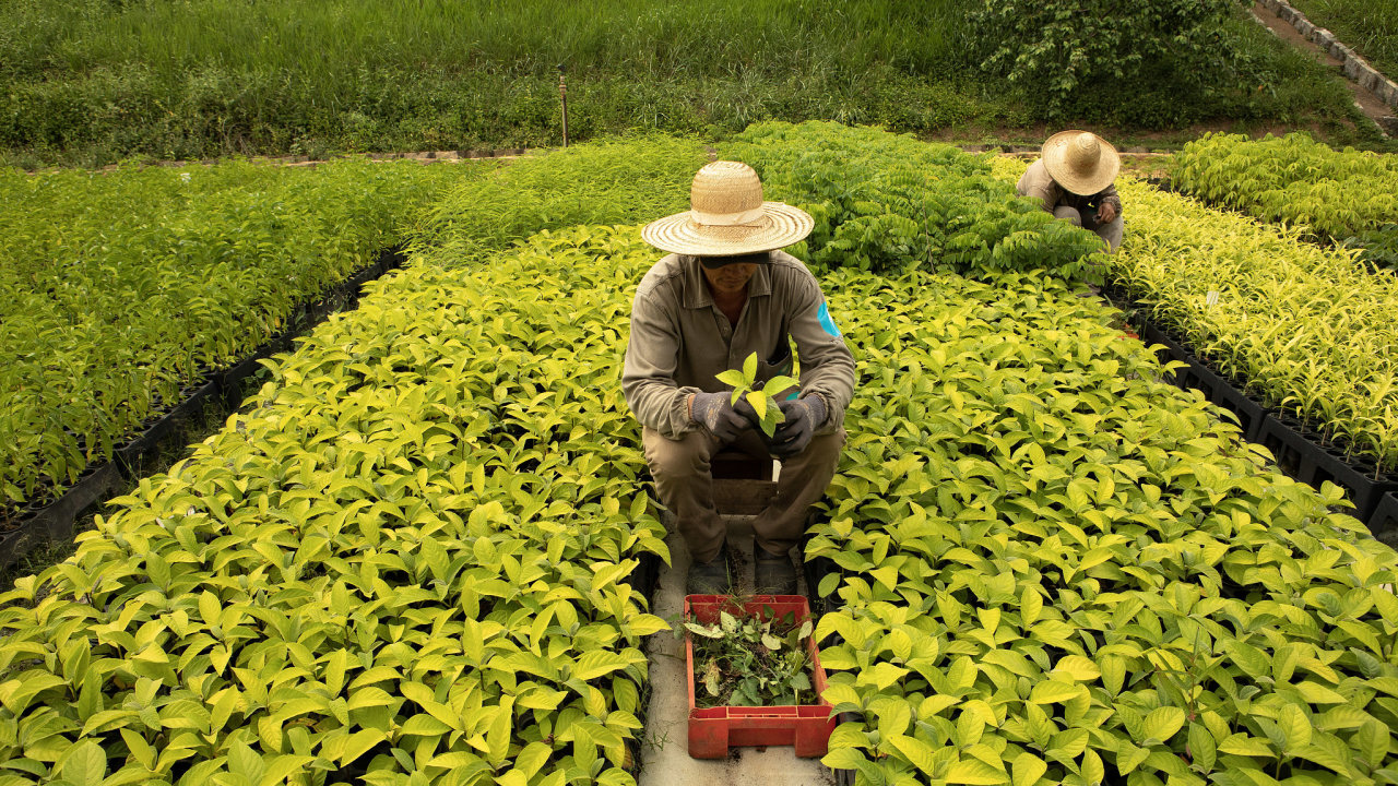 Výsadba v údolí řeky Doca začala v roce 1999. Salgadovi založili environmentální organizaci Instituto Terra a stanovili si cíl vysadit jeden milion stromů.