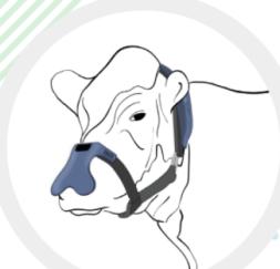 Maska na zachycení metanu z krávy firmy Zelp