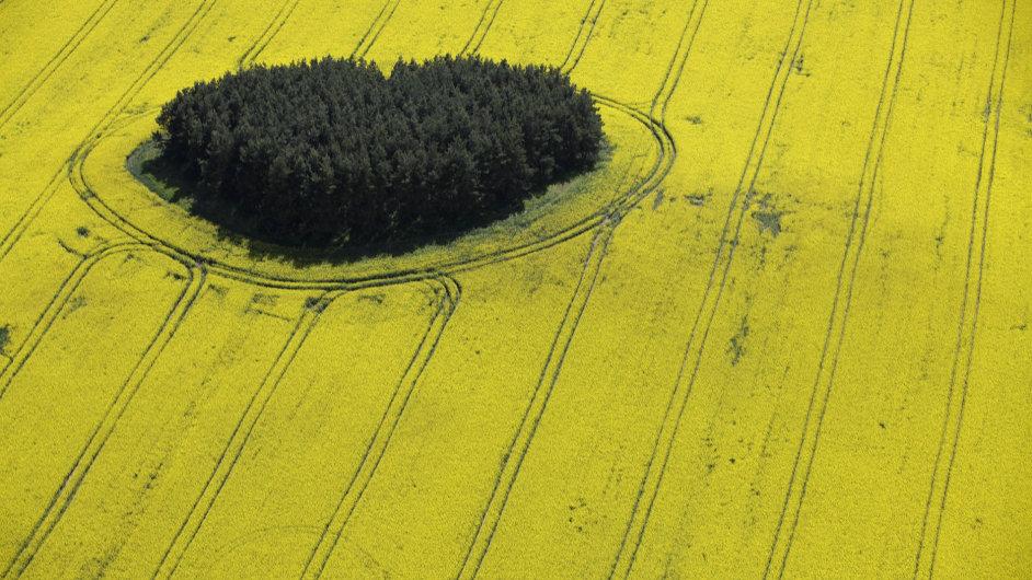 Pole řepky olejné jsou v krajině nepřehlednutelná