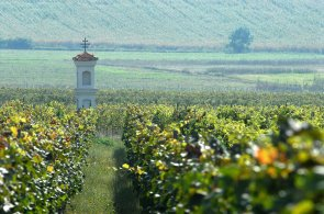 Vinař Baloun: Jižní Moravě nic nechybí. Má nejen víno, ale i lyžařský svah