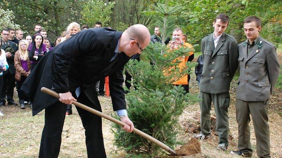 Premiér Bohuslav Sobotka sází strom.