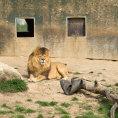 Advokátní kancelář Havel, Holásek & Partners pomáhala zachránit Zoo Tábor.