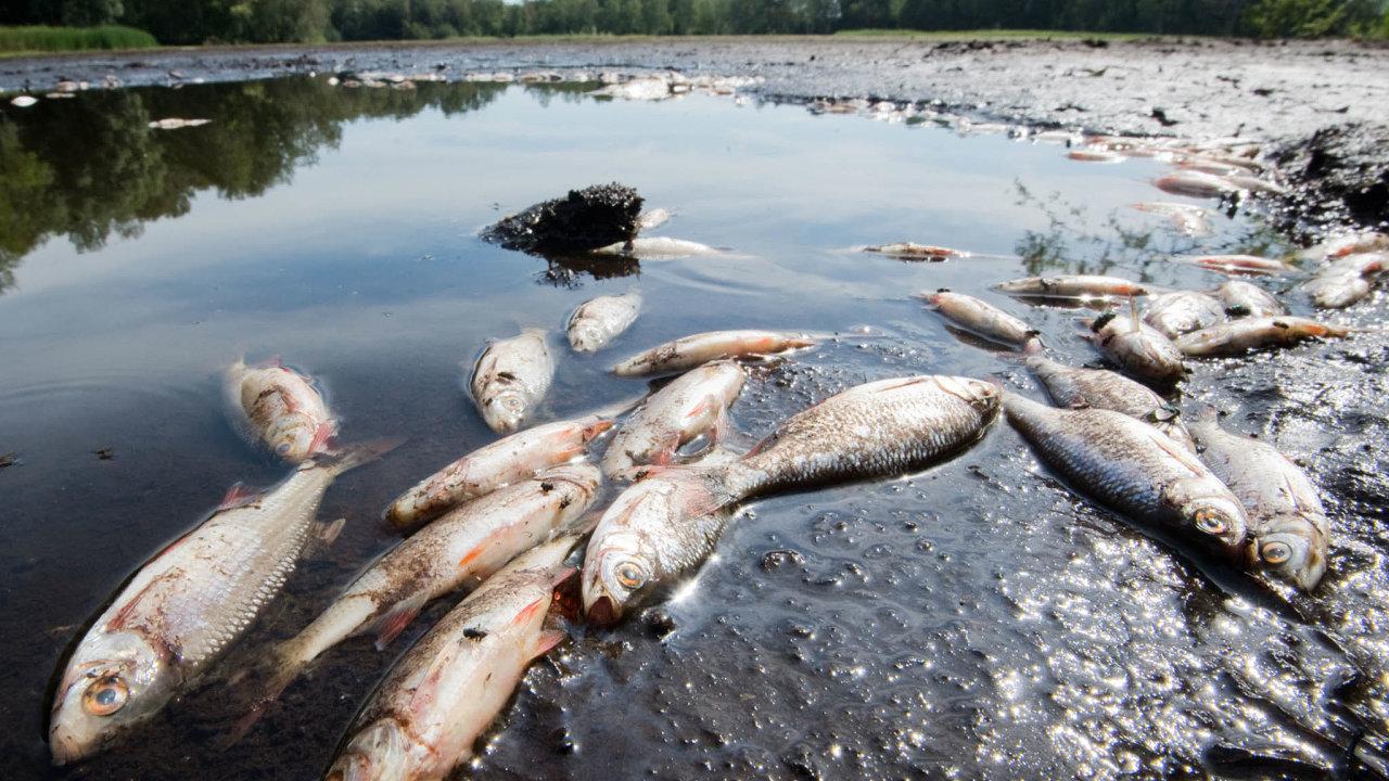 Rybáři varují, že kvůli suchu hynou v českých tocích ryby.