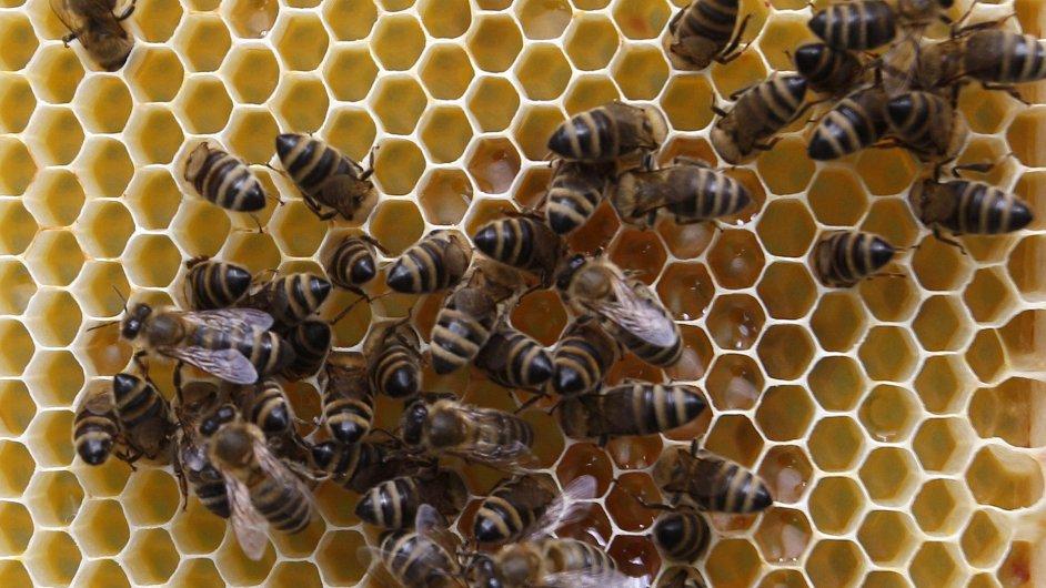 Včely ve Vídni
