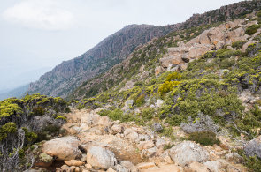 Tasmánie: zmenšená podoba Nového Zélandu. Země kapradin, bažin, skalnatých hor i pláží s tučňáky