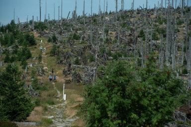 Oblasti na Šumavě zasažené kůrovcem se lépe vzpamatují bez zásahu člověka, tvrdí většina vědců.