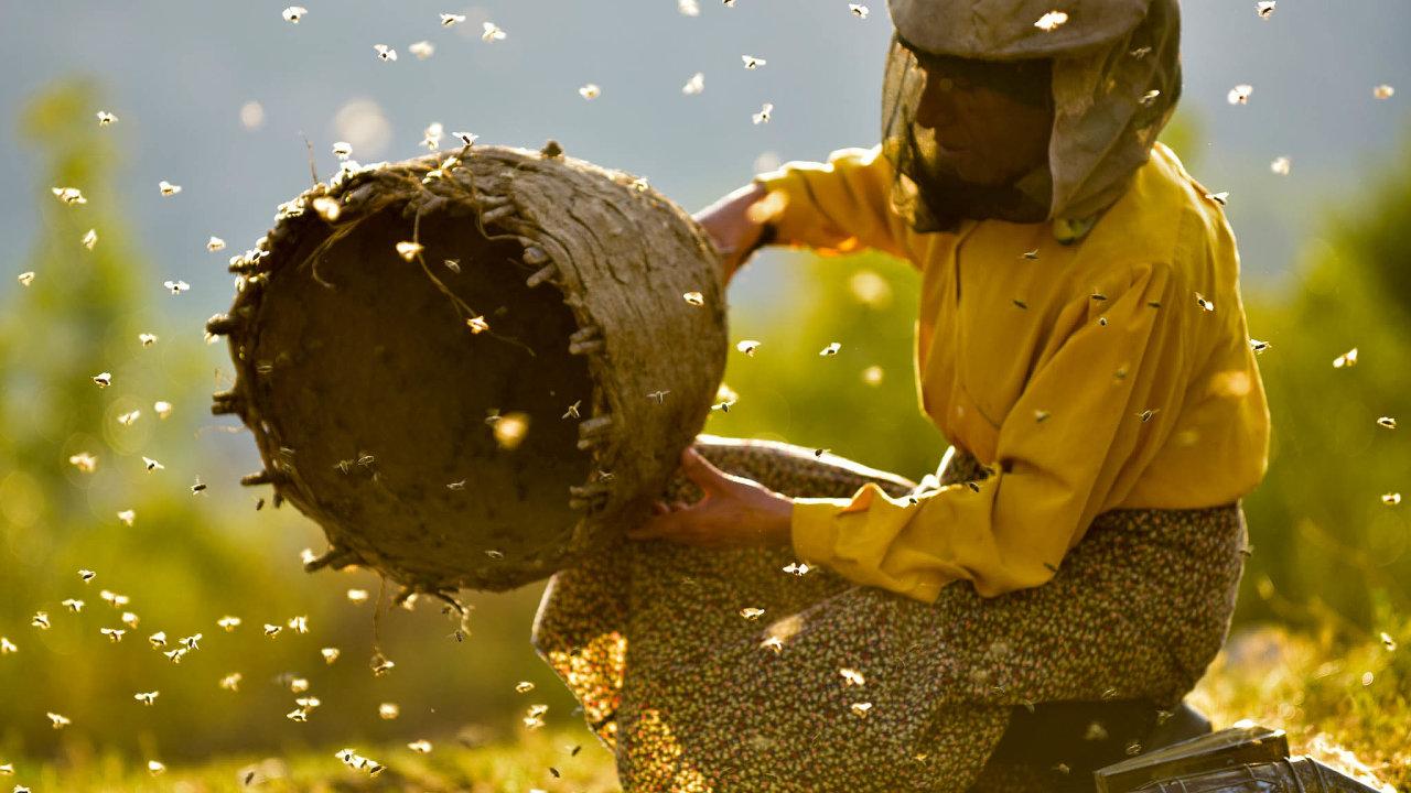 Včelařka Hatidze se stará odivoké včelstvo ipětaosmdesátiletou matku.