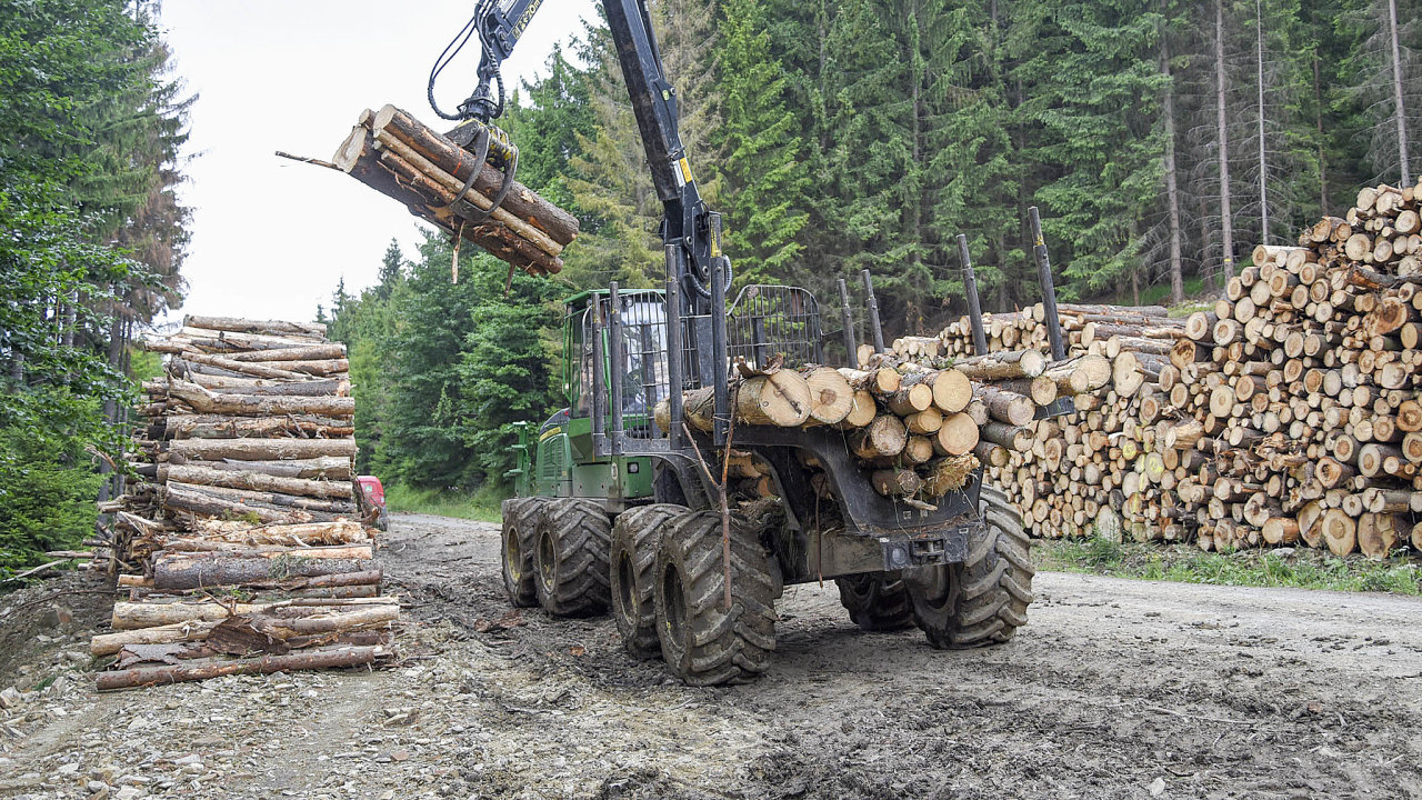 Nenechat rozšířit: Kůrovcem napadené stromy musí majitelé lesů co nejdříve pokácet azbavit kůry, než znich vylétne nová generace dřevokazného brouka. Nyní probíhá jeho druhé letošní rojení.