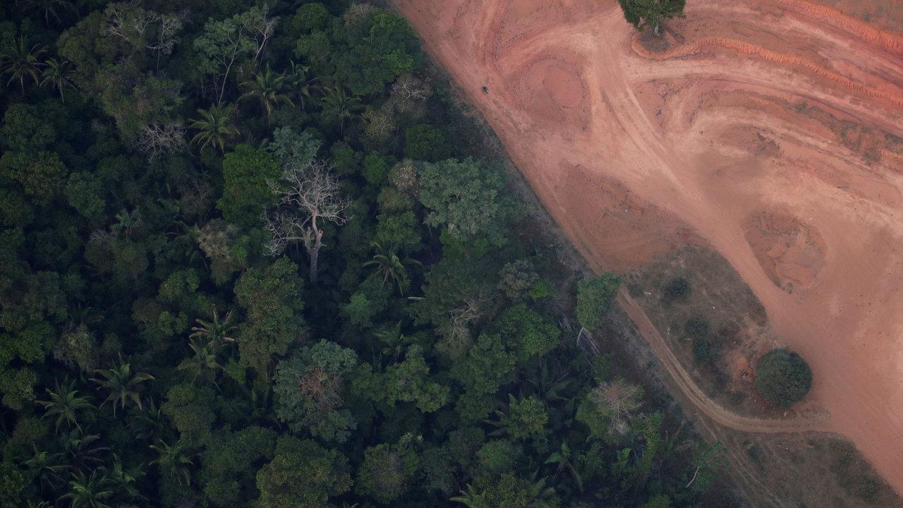 Deštný prales nahrazují pastviny pro dobytek a pole, kde se pěstují sójové boby.