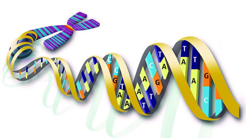 Genová terapie umožňuje opravit chyby v lidské DNA.