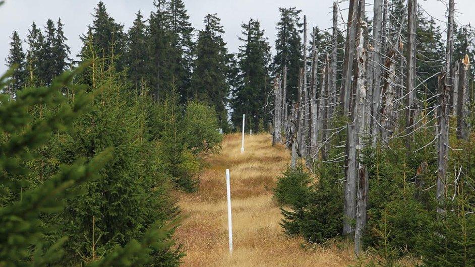 Česko-německá hranice na Šumavě dobře ilustruje rozdílný přístup obou zemí k regeneraci lesů v národním parku.