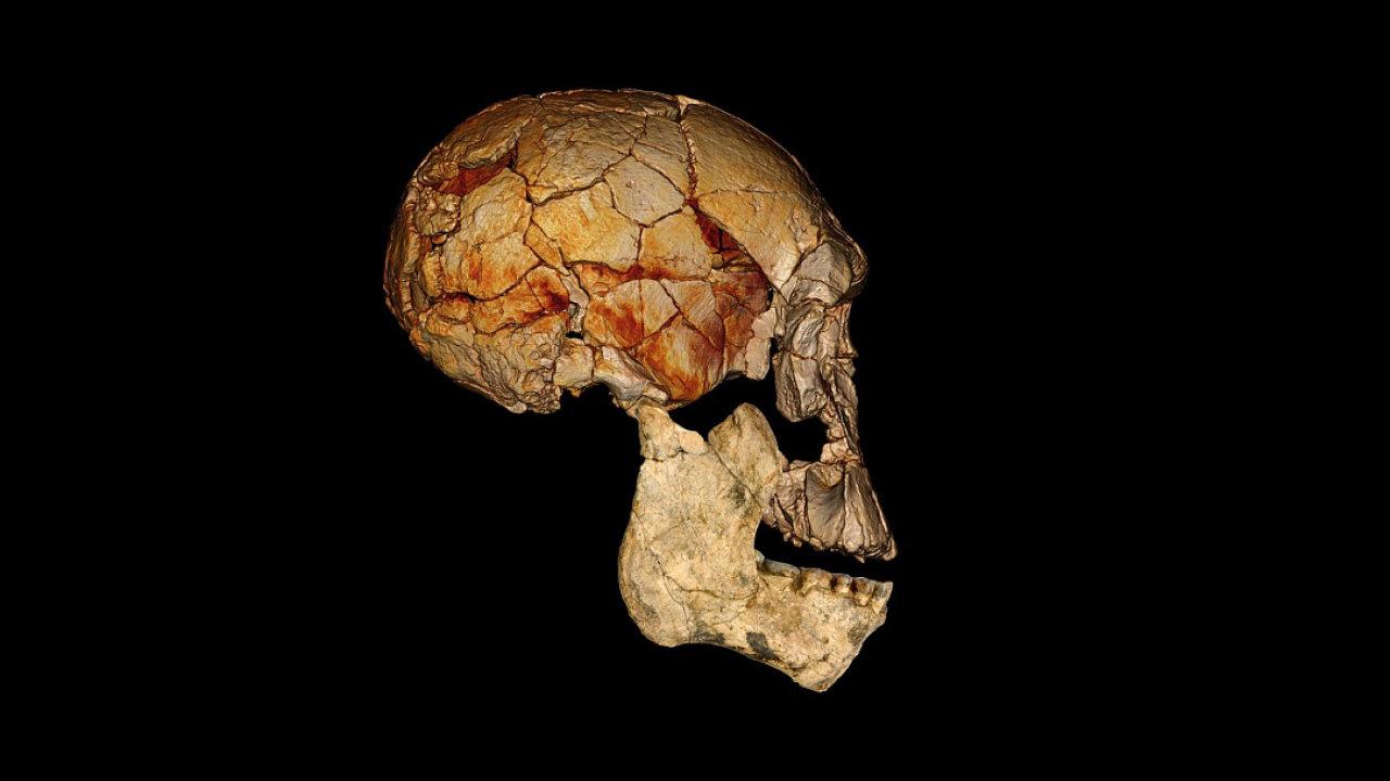 Homo rudolfensis - rekonstrukce lebky