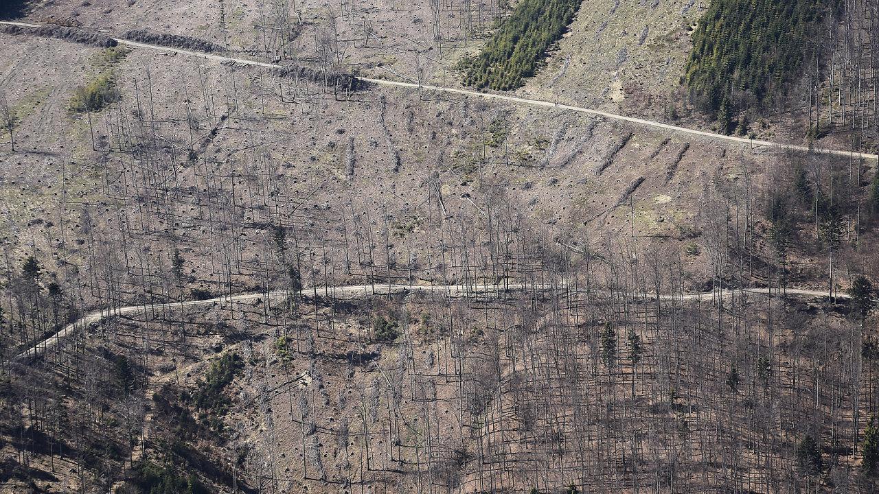 Stát chystá opatření na podporu trhu se dřevem. Jedním znich je ipodpora spalování kůrovcového dřeva velektrárnách formou změny vyhlášky ministerstva průmyslu.