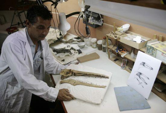 fosílie pravěkého ptáka