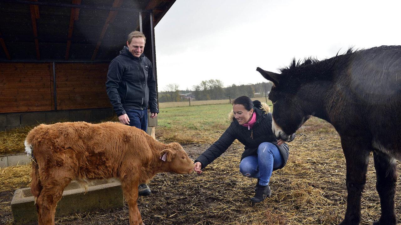 Na statku u Bošinových mají mimo jiné osla a 300 kusů dobytka plemene Salers.