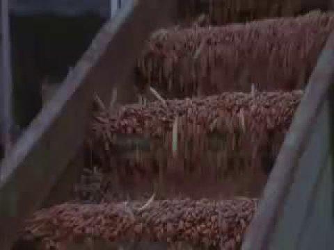 Levon_Helm_Poor_Old_Dirt_Farmer_Official_Music_Video.mp4.jpg