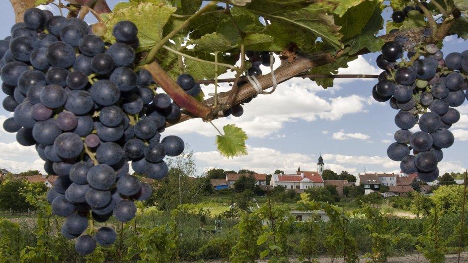Velké Pavlovice, vinobraní
