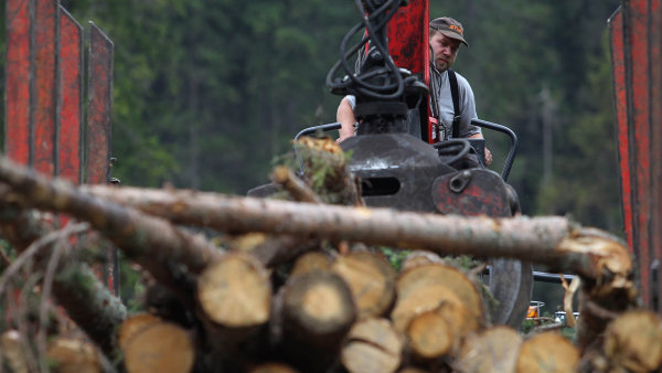 Milliony korun poputují prostřednictvím fondu na zlepšení image dřeva a lesníků.