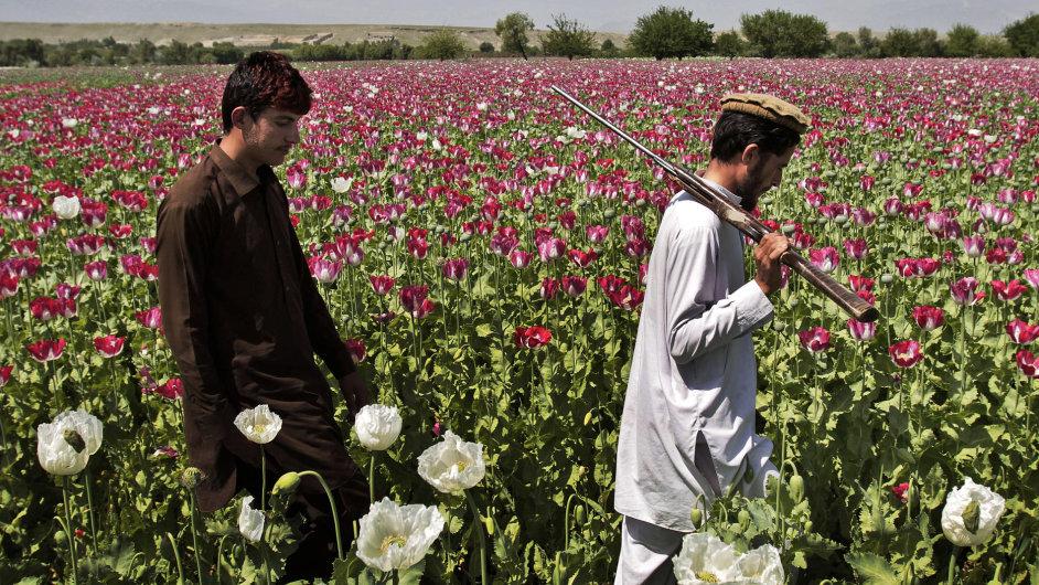 Dželálábád, Afgánistán. Farmáři kontrolují své makové pole.