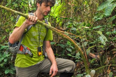 V západní Africe ve volné přírodě již žirafy nepotkáte, varuje badatel, který v konžském pralese hledá vymírající zvířata