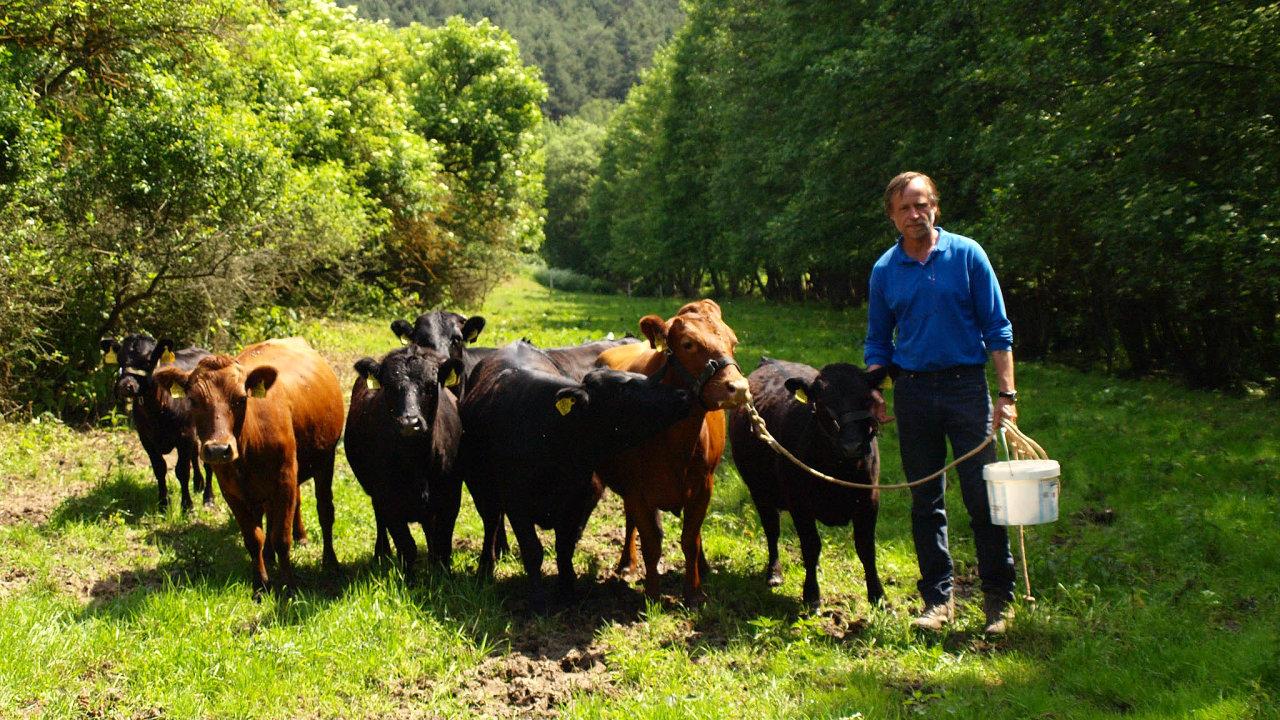 Plemeno dexter se doČeska dostalo zDánska díky firmě Jihočeský chovatel aherci Karlu Rodenovi. Ten toto plemeno chová nasvé zemědělské usedlosti vestředočeském Skrýšově.