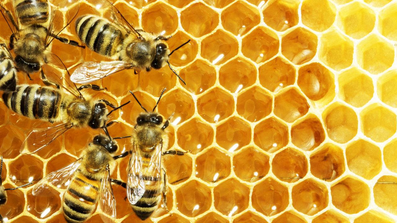 včela, včely