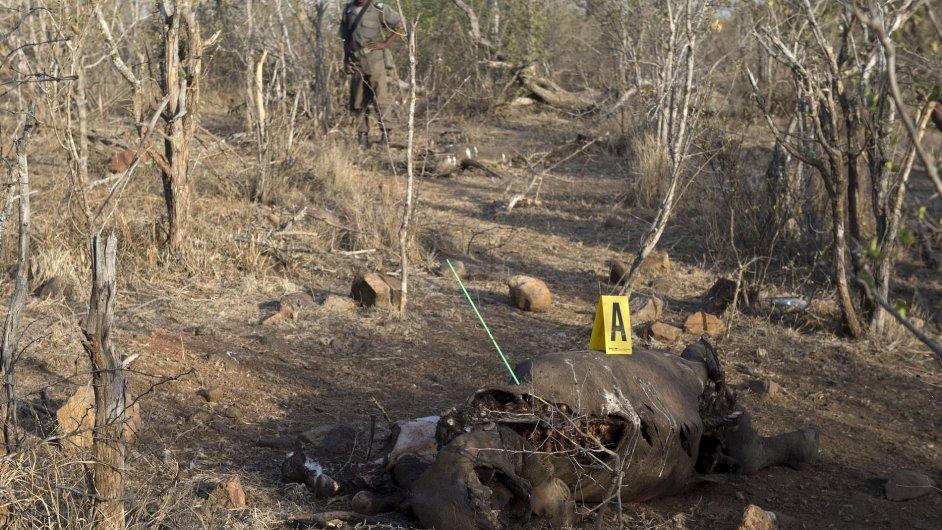 Policie vyšetřuje vraždu nosorožce v jihoafrickém Krugerově národním parku.
