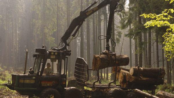 Státní podnik Lesy České republiky dostal od lesnických firem kvůli kalamitě a krizi na trhu se dřevem výpověď ze 76 procent kontraktů - Ilustrační foto.