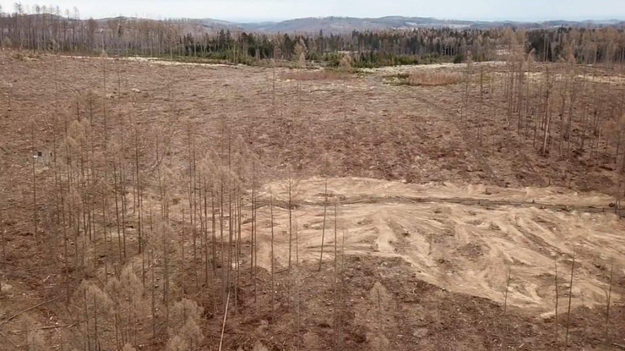 Jeseníky se mění ve vyžrané pustiny. Podívejte se, co dokáže kůrovec.