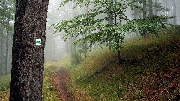 Prohráli spor. Nadace knížete Jana Adama II. musí státu vrátit 600 hektarů lesů.