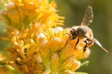 Loni byl nedostatek hlavně tmavého medovicového medu.