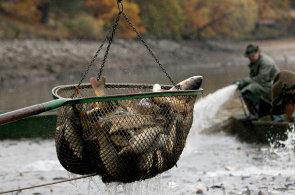Biolog Andreska: Vůni vyloveného Bezdreva mám spojenou s křikem volavek