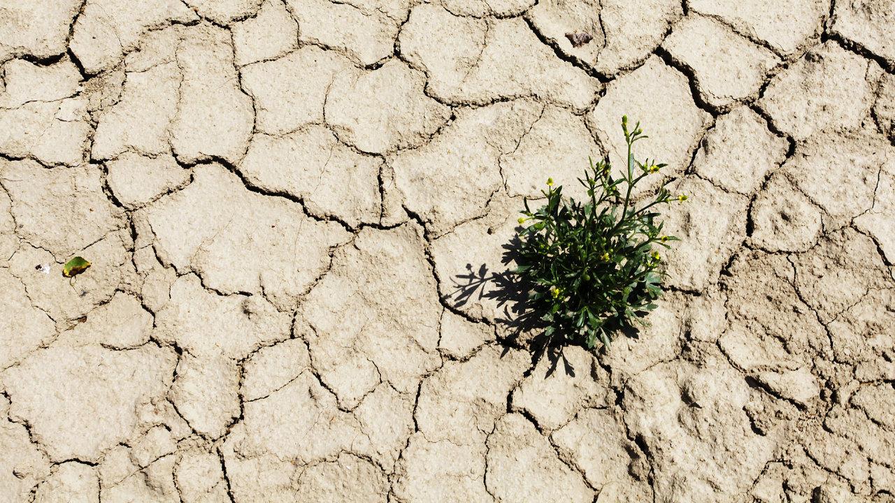 Desítky miliard korun bude Česko investovat do boje proti suchu.