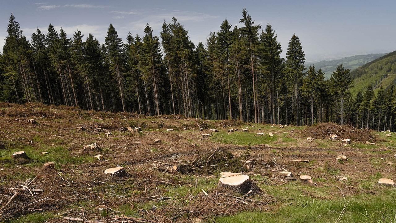 Pozásahu těžařů. Kůrovec naseveru Moravy se nevyhnul ani lesům vBeskydech, kde probíhá intenzivní těžba napadených dřevin.
