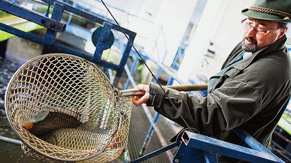 MF chce výjimku z EET rozšířit o předvánoční prodej ryb - Ilustrační foto.
