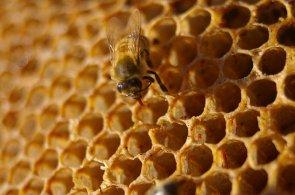 Národní divadlo chová včely, za rok by tak mohl být národní med