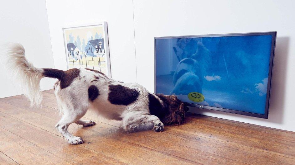 Interaktiví výstava pro psy se koná britské metropoli Londýn.