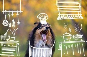 Útulek Dogpoint vydává nový charitativní kalendář. Podívejte se na psí superhrdiny