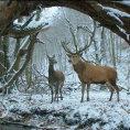 Na Berlinale soutěží maďarský film z prostředí jatek, našel soulad mezi krvavostí a romantickým citem