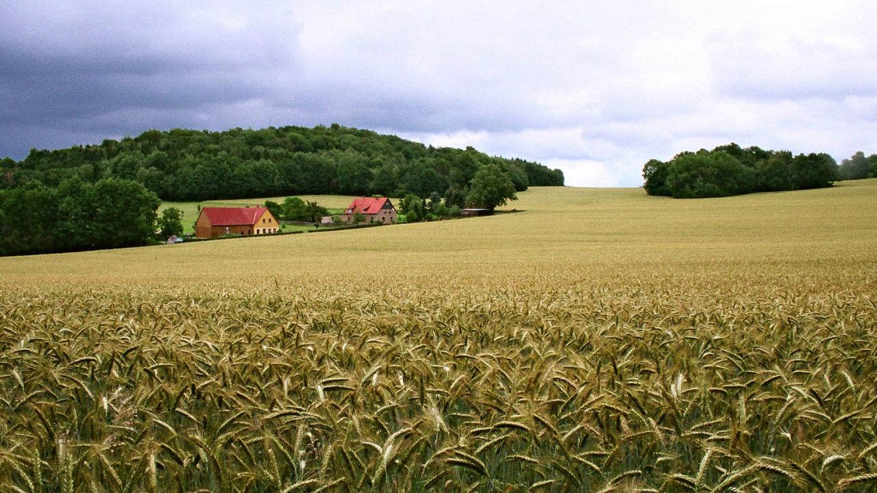 U obilí, řepky a kukuřice používají čeští zemědělci glyfosát v největší míře. Přípravkem Roundup stříkají i dozrávající úrodu.