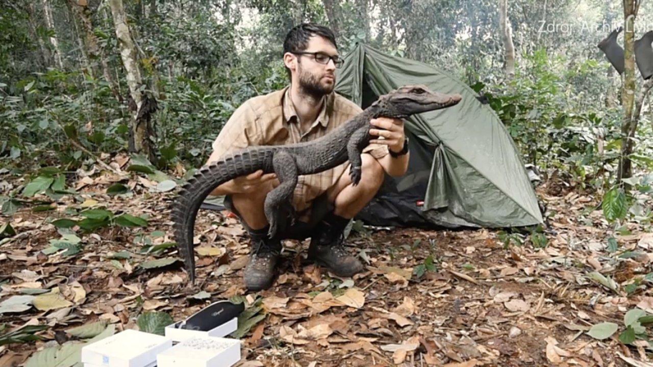 Čeští vědci objevili nový druh krokodýla.