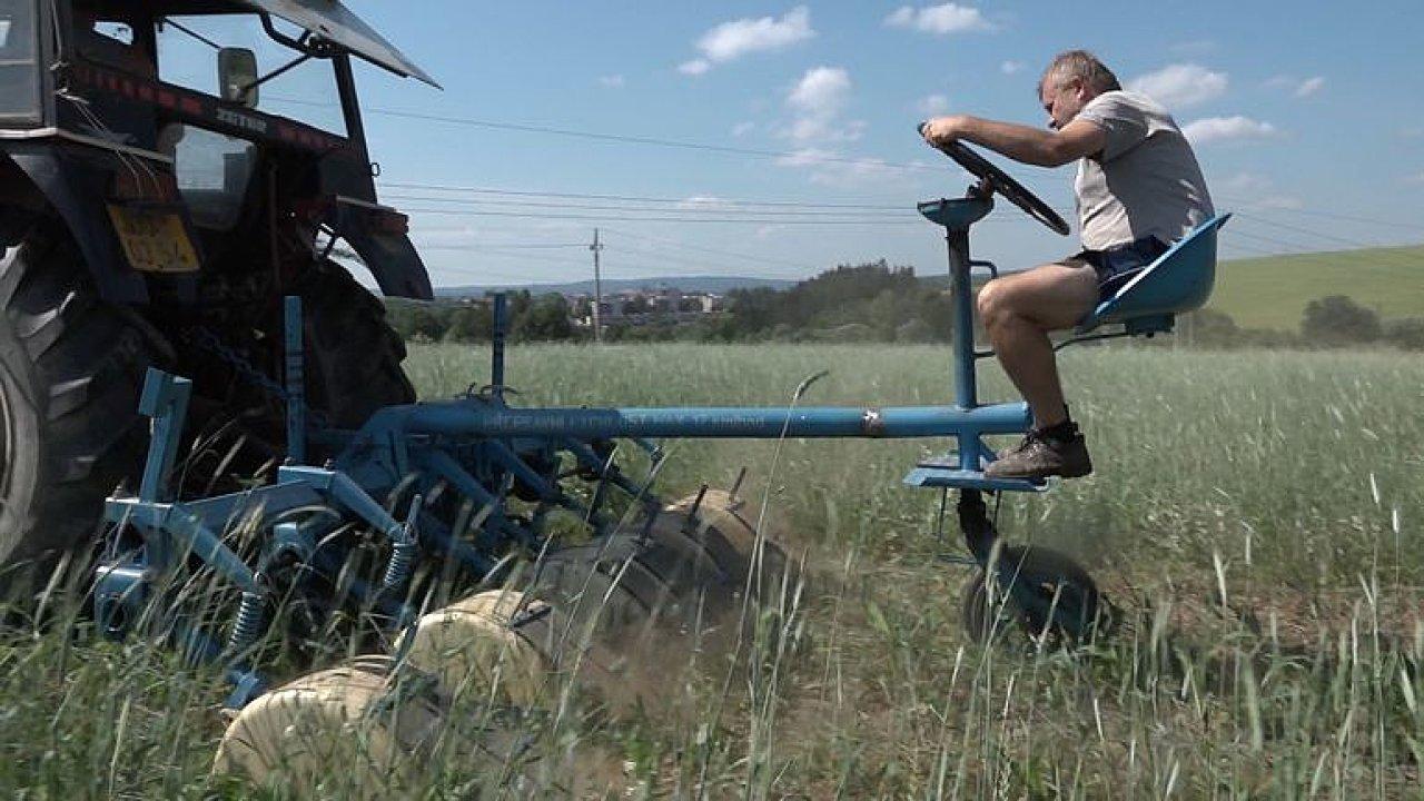 Farmář z Jihlavy se snaží obelstít půdní erozi. Seje žito s kukuřicí dohromady.